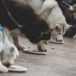 เทศกาลของน้องหมาสี่ขาแสนรู้ DOG CLUB FESTIVAL