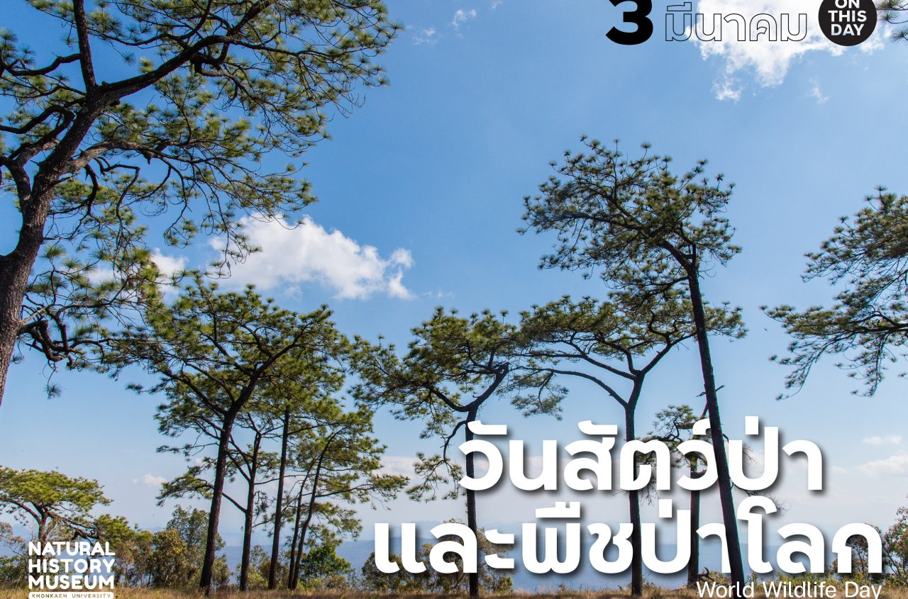 otd_3mar-01